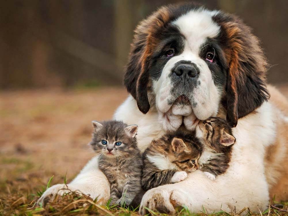 chó yêu mèo