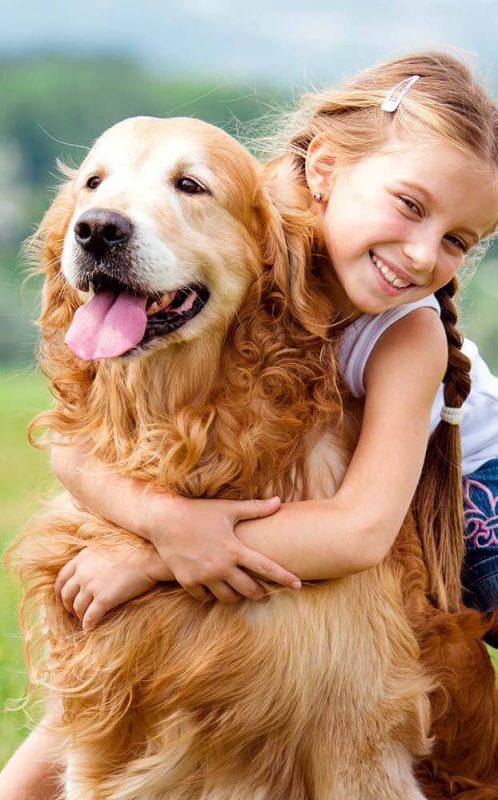 yêu chó golden