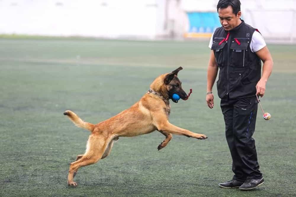 đồ chơi cho chó Malinois
