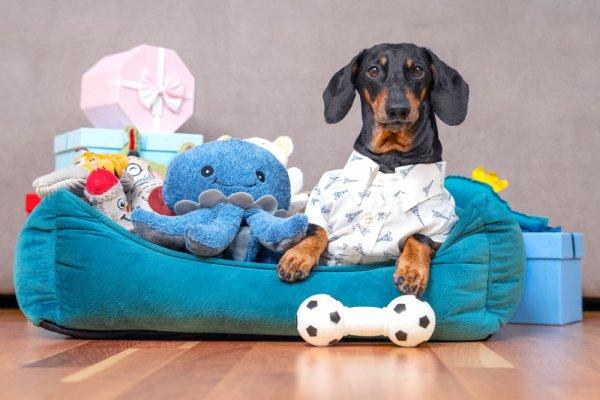 đồ chơi cho thú cưng