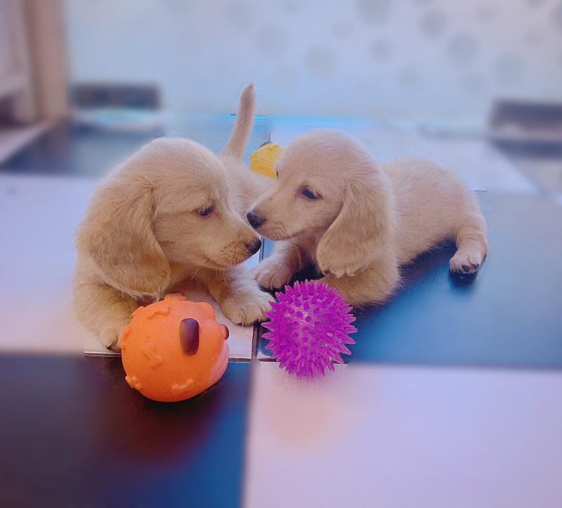 đồ chơi cho thú cưng1