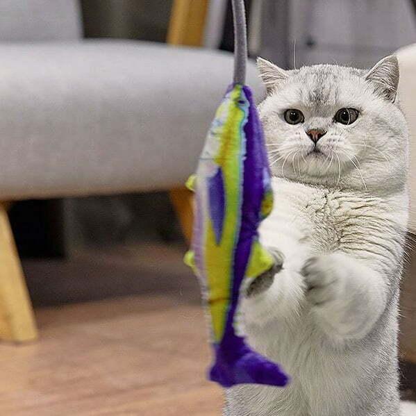 đồ chơi cho thú cưng2
