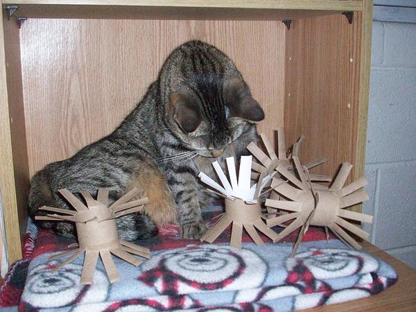 làm đồ chơi cho mèo bằng giấy1