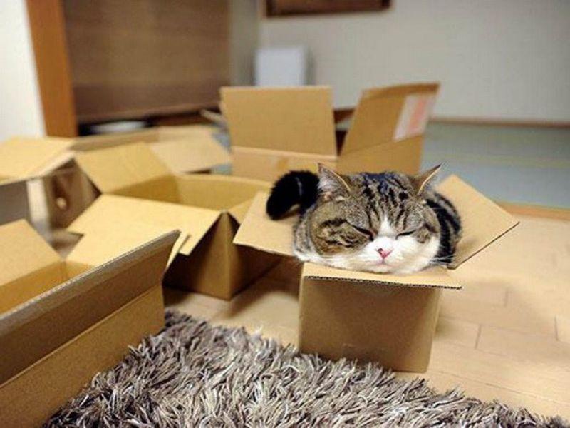 làm đồ chơi cho mèo bằng giấy